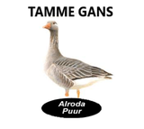 Alroda Puur Gans -245 gram_